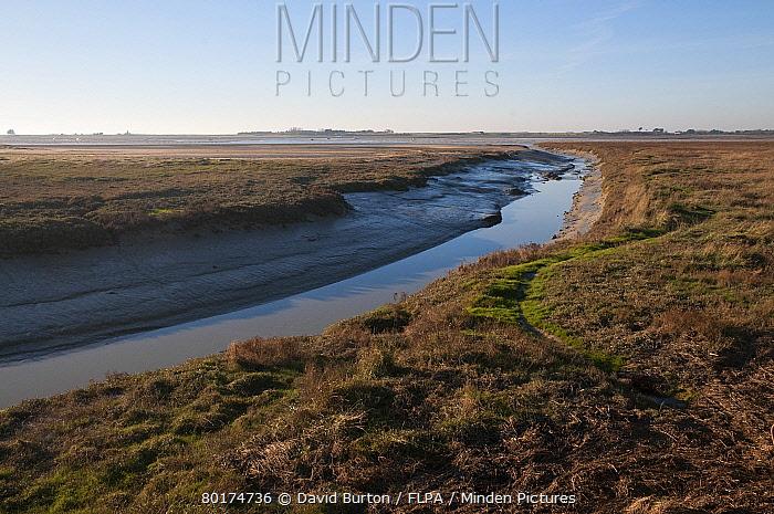 View of tidal creek and saltmarsh habitat at low tide, Regneville-sur-mer, Manche, Normandy, France, December  -  David Burton/ FLPA