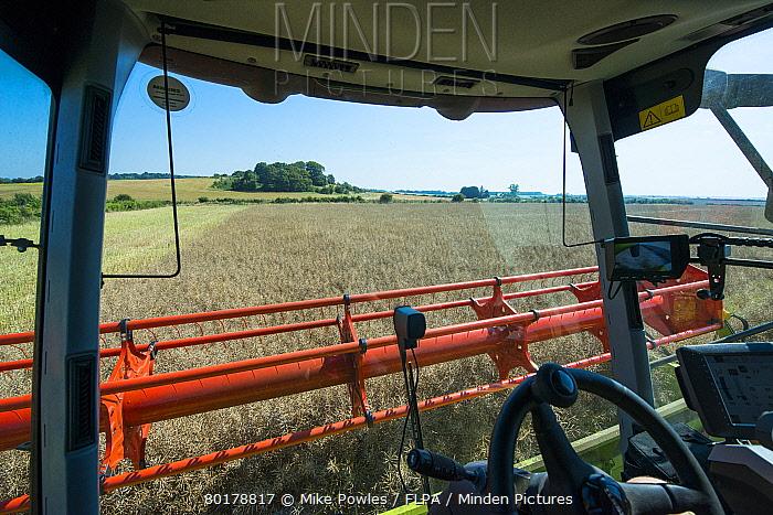 Oilseed Rape (Brassica napus) crop, interior of Claas Lexion combine harvester cab, harvesting field, Norfolk, England, July  -  Mike Powles/ FLPA