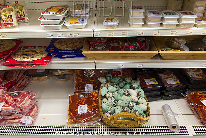 Common Guillemot (Uria aalge) eggs, for sale in supermarket, Iceland, June  -  Bill Coster/ FLPA