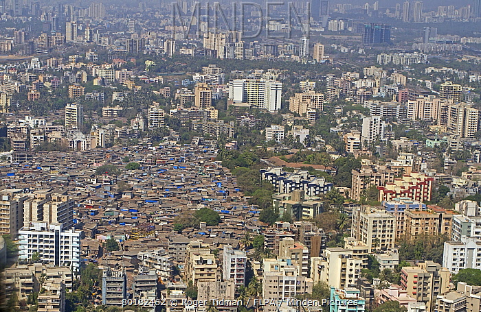 Aerial view of slum areas surrounded by luxury apartments and offices, India, February  -  Roger Tidman/ FLPA