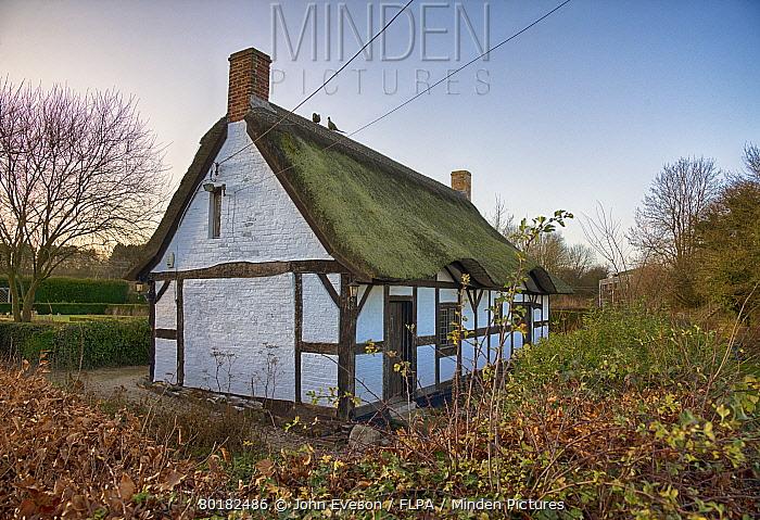 th century half-timbered cottage, Izaak Walton's Cottage, Shallowford, Staffordshire, England, December  -  John Eveson/ FLPA