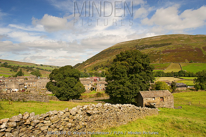 View of drystone walls and village, Thwaite, Swaledale, Yorkshire Dales, North Yorkshire, England, September  -  Wayne Hutchinson/ FLPA