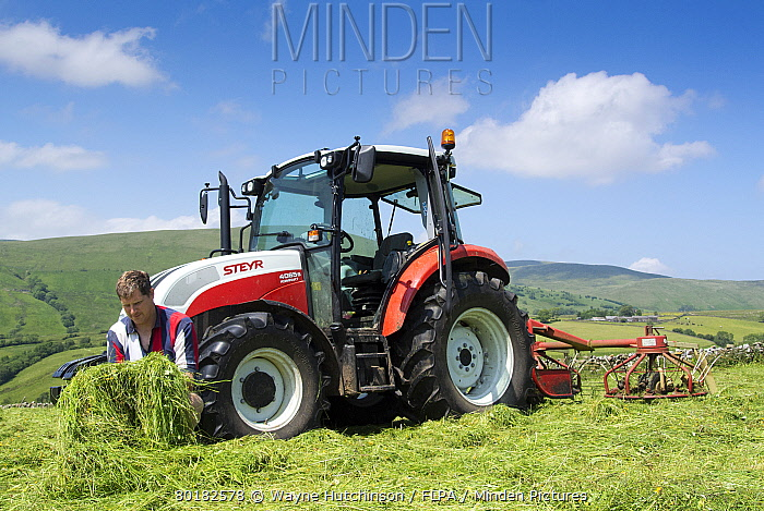 Farmer checking quality of mown grass, beside Steyr tractor with tedder, Cumbria, England, July  -  Wayne Hutchinson/ FLPA