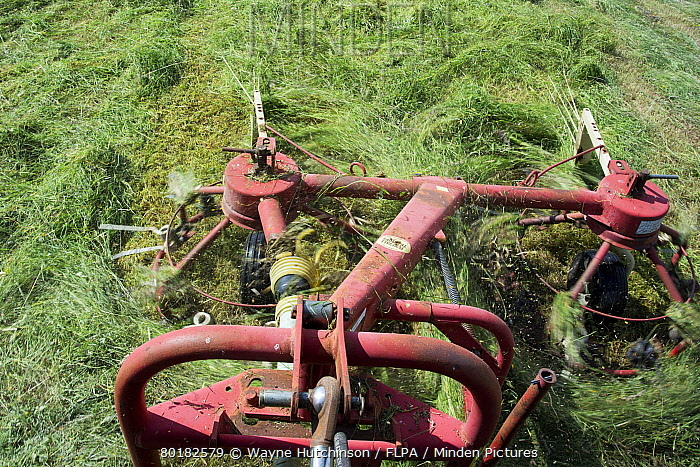 Close-up of tedder, spreading newly mown grass to wilt better and make good hay, Cumbria, England, July  -  Wayne Hutchinson/ FLPA