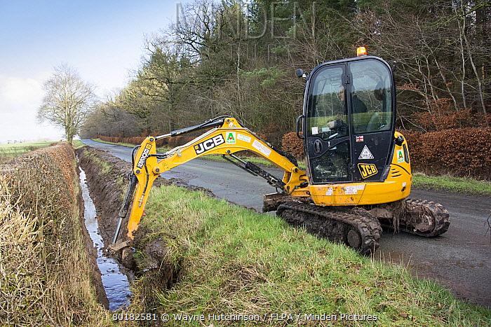 Cleaning out roadside drainage ditches which had become overgrown using JCB digger, England, February  -  Wayne Hutchinson/ FLPA