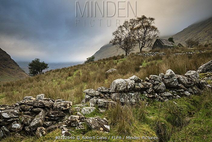 View of drystone walls and abandoned farmhouse, Black Valley, Macgillycuddy's Reeks, Killarney, County Kerry, Munster, Ireland, November  -  Robert Canis/ FLPA