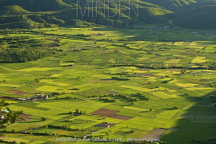 View of field patterns in mountain valley, in evening sunlight, Valle di Frascaro, near Norcia, Apennines, Italy, May  -  Bob Gibbons/ FLPA