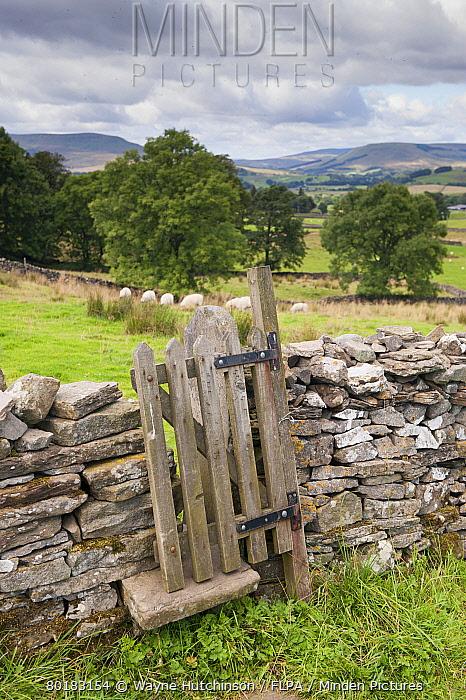 Stile and gate in drystone wall on public footpath, near Burtersett, Hawes, Wensleydale, Yorkshire Dales National Park, North Yorkshire, England, August  -  Wayne Hutchinson/ FLPA