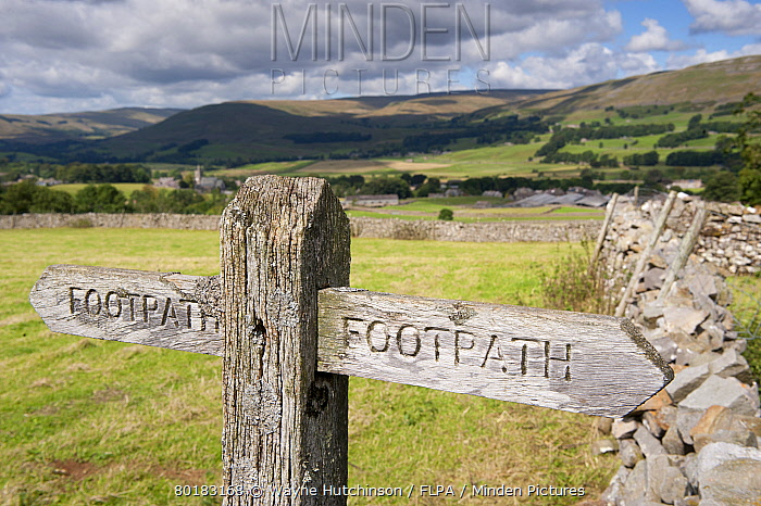 Wooden 'Footpath' sign post on public footpath, near Hawes, Wensleydale, Yorkshire Dales National Park, North Yorkshire, England, August  -  Wayne Hutchinson/ FLPA
