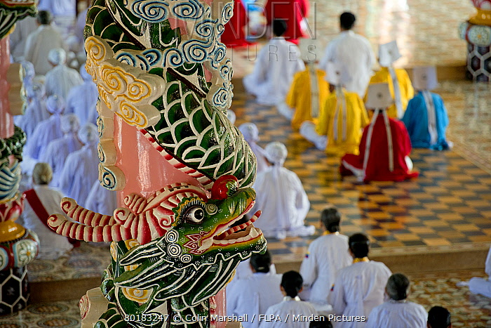 Caodaist disciples sitting beside colourful columns with dragons during ceremony, Cao Dai temple, Tay Ninh Holy See, Tay Ninh, Tay Ninh Province, Vietnam, December  -  Colin Marshall/ FLPA