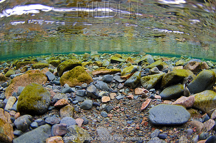 Underwater View Of Stony Riverbed In River Flowing Into Glacial Lake, River  Liza, Ennerdale