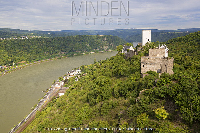 View of medieval castle overlooking river, Sterrenberg Castle, River Rhine, Kamp-Bornhofen, Rhineland-Palatinate, Germany, August  -  Bernd Rohrschneider/ FLPA