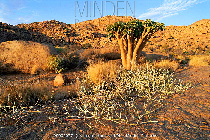 Brandberg mountain summit, 2580m, site of ancient rock cave paintings, Namibia  -  Vincent Munier/ npl