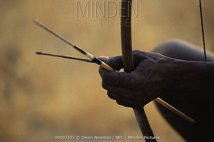 Close-up of traditional bow and arrow of Jo, Hoan bushman, Bushmanland, Namibia 1996  -  Owen Newman/ npl