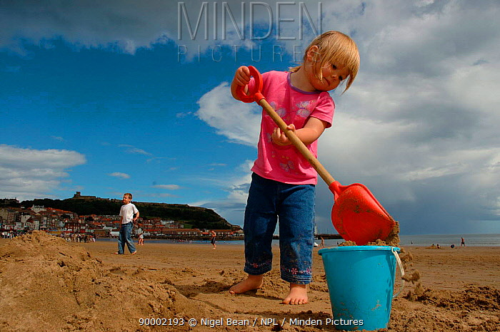 Young girl digging sand at seaside, Scarborough, North Yorkshire, UK 2005  -  Nigel Bean/ npl