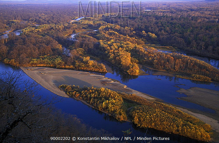 Aerial view of river Birkin, right tributary of Ussuri River, with virgin riparian forest, North Ussuriland, Primorsky, Siberia, far east Russia  -  Konstantin Mikhailov/ npl