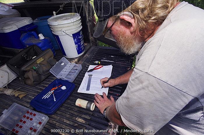 Ferruginous Pygmy Owl (Glaucidium brasilianum)biologist recording research results, Willacy County, Rio Grande Valley, Texas  -  Rolf Nussbaumer/ npl