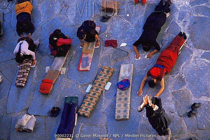 Pilgrims practicing prostration at Joklang Temple, Lhasa, Tibet 2007  -  Gavin Maxwell/ npl