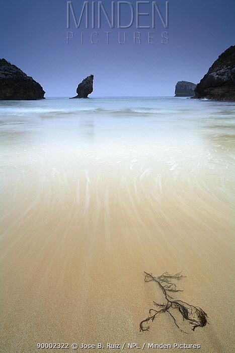 Water washing up over seaweed on beach, Buelna beach, El Picon, Llanes, Asturias, Spain  -  Jose B. Ruiz/ npl