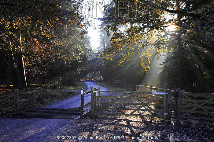 Cattle grid, grate on Bolderwood Aboretum Ornamental Drive, New Forest, Hampshire, England  -  Adam Burton/ npl