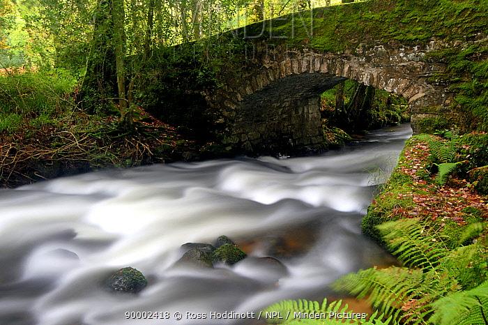 Bridge over the The River Dart near Buckland in the Moor, Dartmoor National Park, Devon, UK, September 2007  -  Ross Hoddinott/ npl