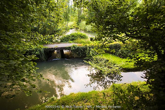 River Eye and clapper bridge, Widford, Oxfordshire, UK  -  Nick Turner/ npl