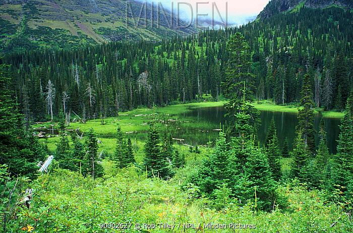 Upper Two Medicine Lake, Glacier NP, Montana, USA, July 1994  -  Rob Tilley/ npl
