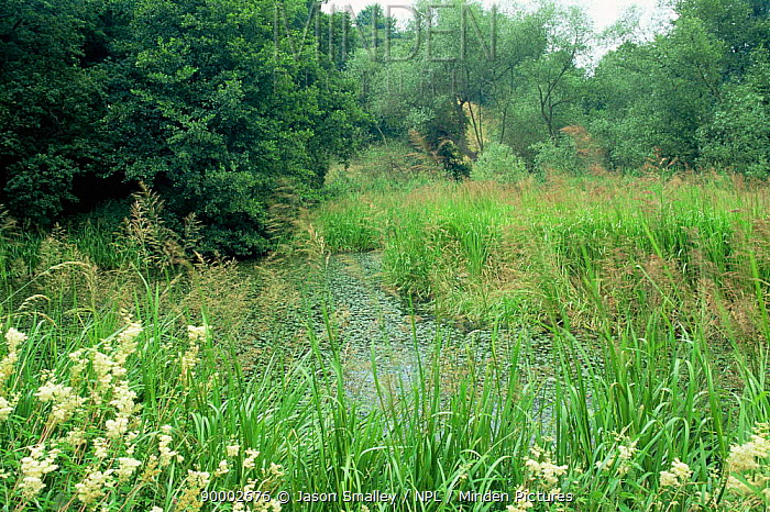 Disused canal overgrown with pondweed and aquatic plants, Cromford canal, Derbyshire, UK  -  Jason Smalley/ npl