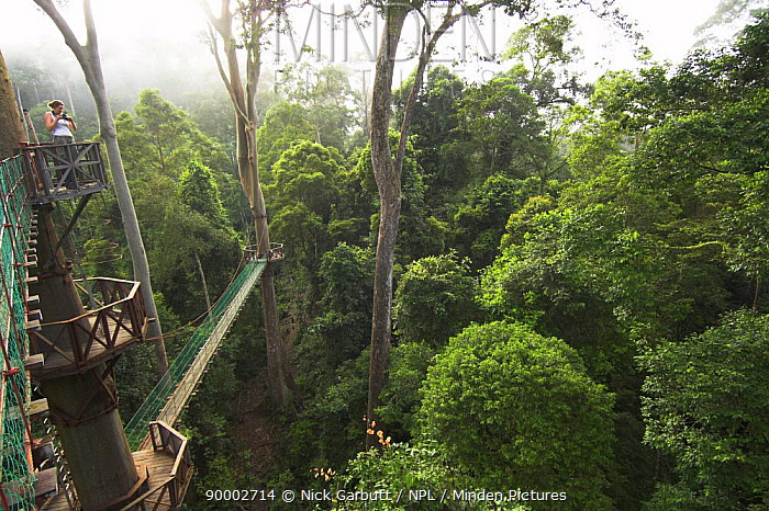 View acroos the forest from the canopy walkway, Danum Valley, Sabah, Borneo  -  Nick Garbutt/ npl