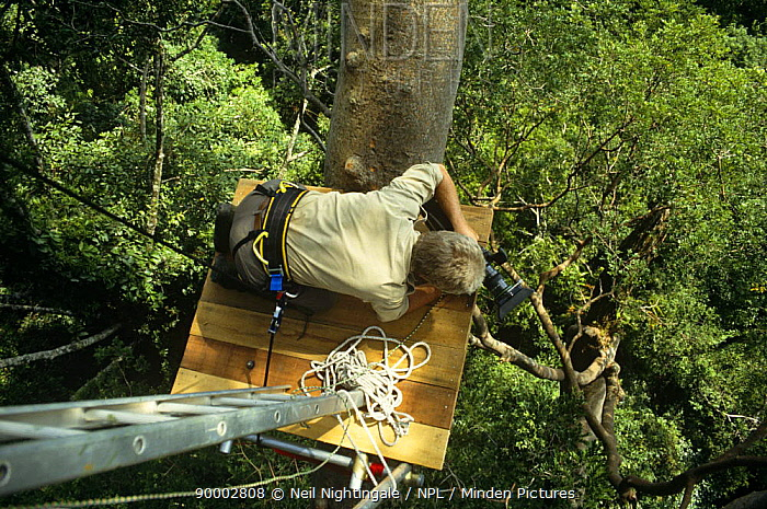 Hugh Miles filming from a canopy platform in the tropical rainforest of Sabah, Borneo On location for BBC television series Private Life of Plants, early 1990s  -  Neil Nightingale/ npl