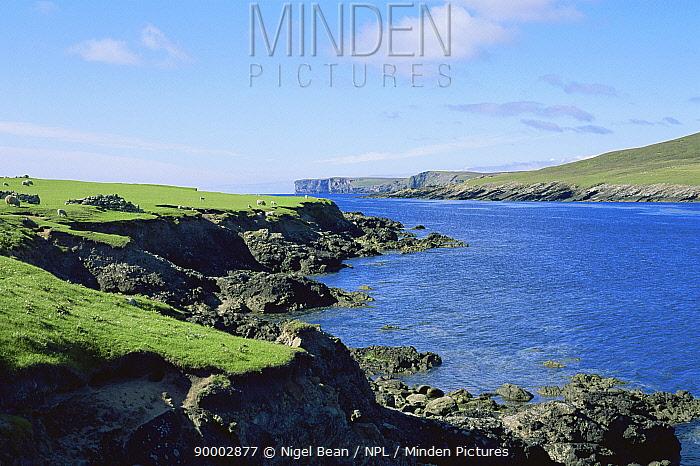 Noss Sound, Shetland Is, Outer Hebrides, Scotland, UK  -  Nigel Bean/ npl