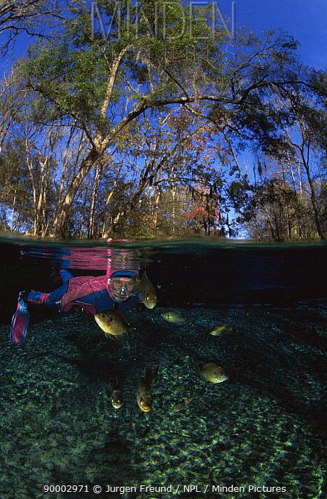 Snorkeling in freshwater pond with freshwater bass, Florida, USA  -  Jurgen Freund/ npl