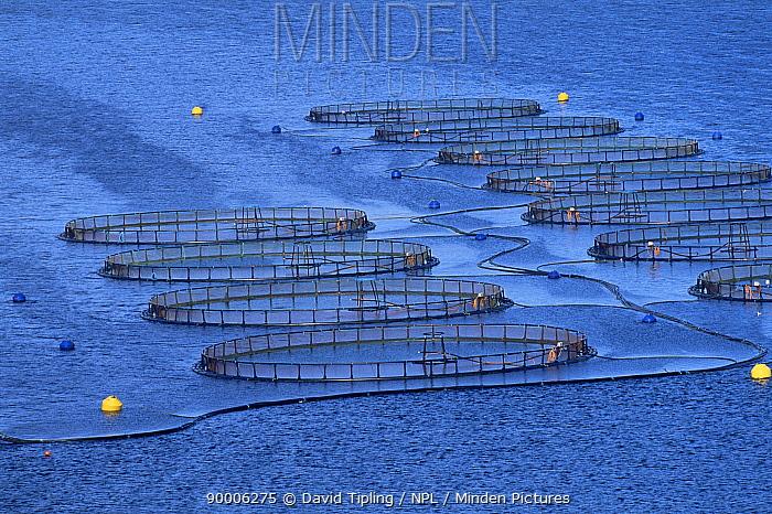 Fish farm in sea inlet, Shetland Is, Scotland, UK  -  David Tipling/ npl