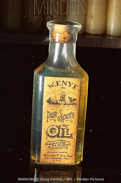Sperm Whale (Physeter macrocephalus)Old bottle for Sperm whale oil, Whaler's village museum, Hawaii  -  Doug Perrine/ npl