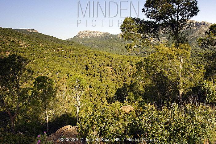 Espuna peak, Sierra espuna National Park, Murcia, Spain  -  Jose B. Ruiz/ npl