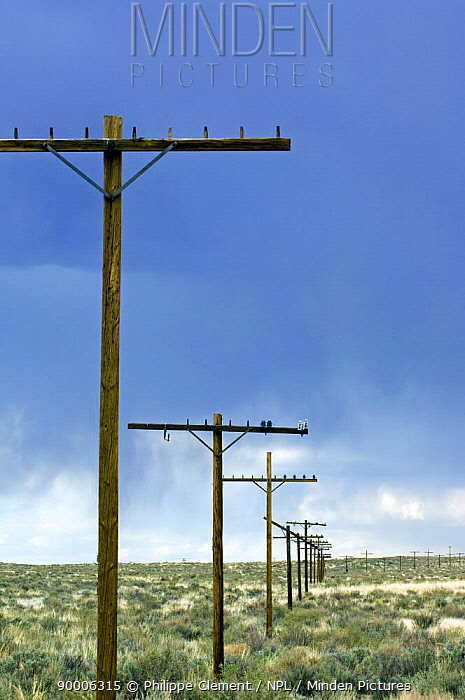 Old telegraph poles along the vanished Route 66 Arizona, USA 2007  -  Philippe Clement/ npl