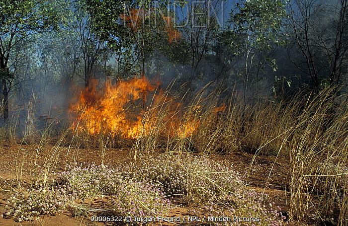 Bush fire in the outback, Western Australia  -  Jurgen Freund/ npl