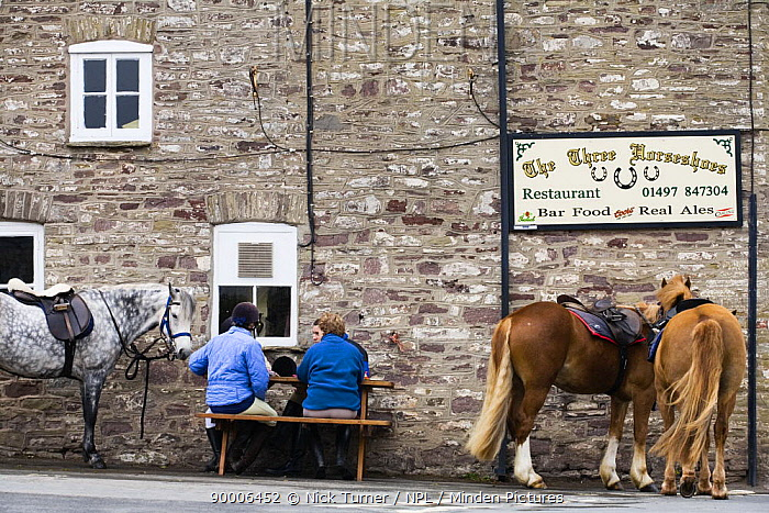 Horses and riders relaxing outside the Three Horseshoes Pub on a horse-riding holiday, Brecon Beacons National Park, Powys, Wales  -  Nick Turner/ npl
