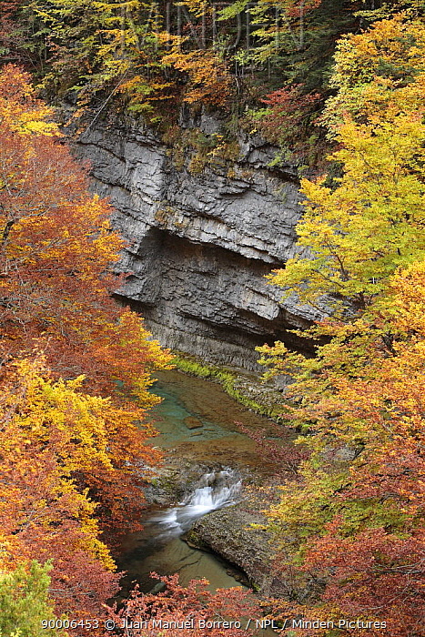 Arazas River viewed through autumn woodland in Ordesa y Monte Perdido National Park, Huesca, Spain  -  Juan Manuel Borrero/ npl
