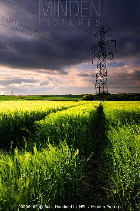 Electricity pylon and Barley field with dark rain clouds above, near Bulkworthy, Devon, UK May 08  -  Ross Hoddinott/ npl