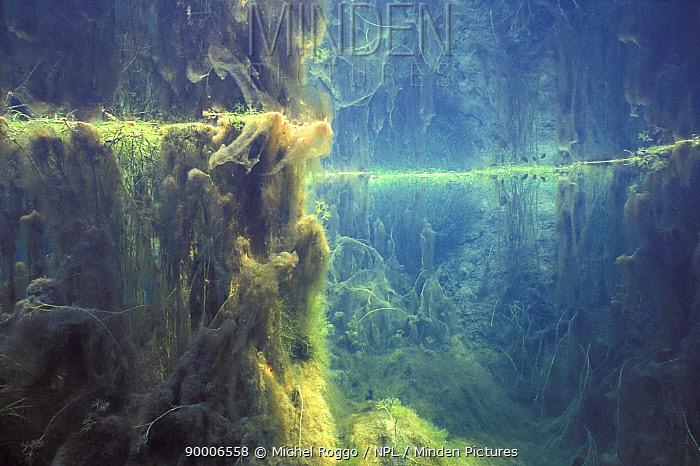 Underwater landscape in Spring creek, a tributary of the Saane river, Switzerland, February  -  Michel Roggo/ npl