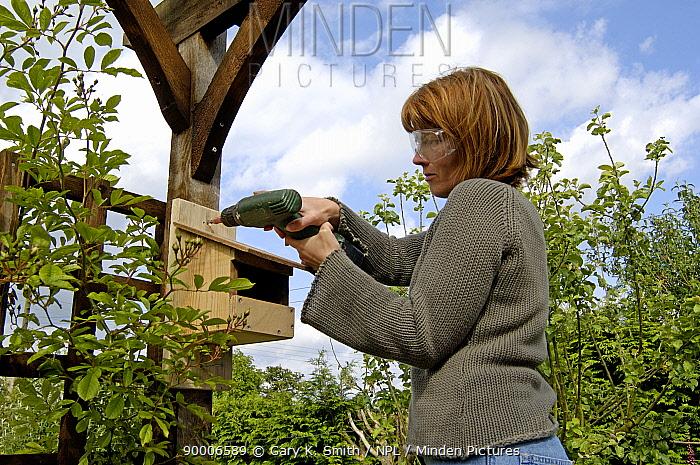 Fixing a nest box to a pergola in suburban garden, UK  -  Gary K. Smith/ npl
