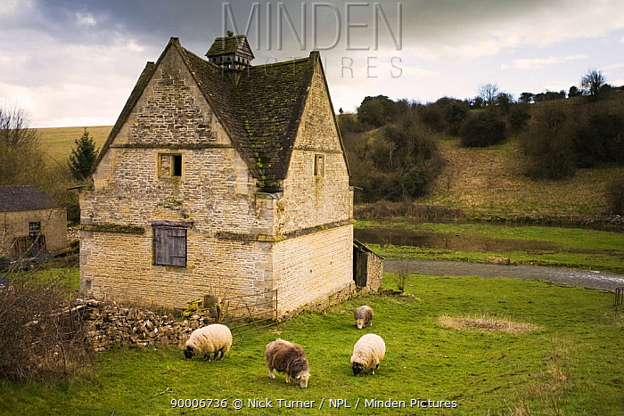 Exterior of 16th Century Dovecote, Naunton, Gloucestershire, UK  -  Nick Turner/ npl