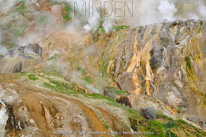 Stain glass wall and Geyser River in the Valley of the Geysers, Kronotsky Zapovednik, Kamchatka, Far East Russia, May 2006 Brown bears like to gather in the warm valley in spring to feed on fresh grasses  -  Igor Shpilenok/ npl