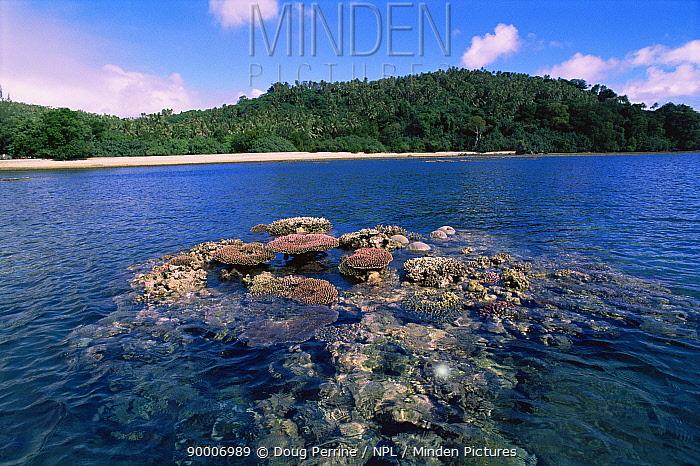 Coral reef exposed at low tide, Epi Is, Vanuatu, South Pacific  -  Doug Perrine/ npl