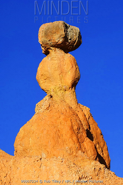 Hoodoo, Bryce Canyon NP, Utah, USA  -  Rob Tilley/ npl