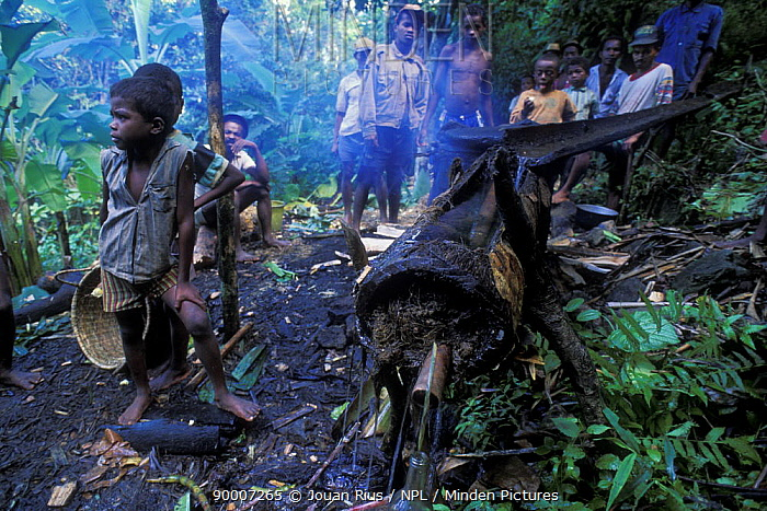 People gathered round an illegal rum alambic in a forest, East Madagascar  -  Jouan & Rius/ npl