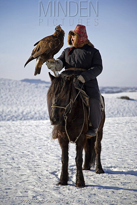 A Kazakh hunter riding horse with his Golden eagle, out hunting in the Altai mountains of Xinjiang Province, north-west China February 2007  -  George Chan/ npl