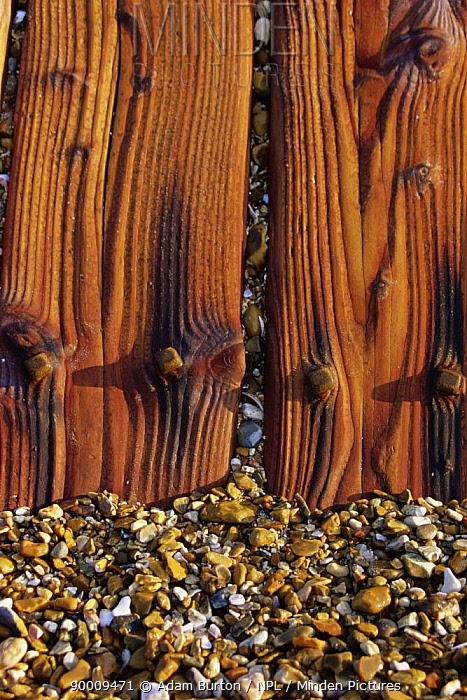Close up of wooden sea defences on pebble beach at Hayling Island, Hampshire  -  Adam Burton/ npl