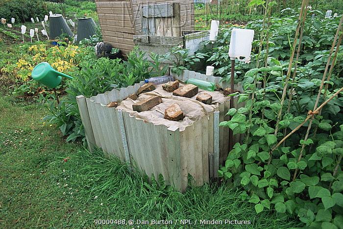 Compost heap in allotment garden, Devon, UK  -  Dan Burton/ npl